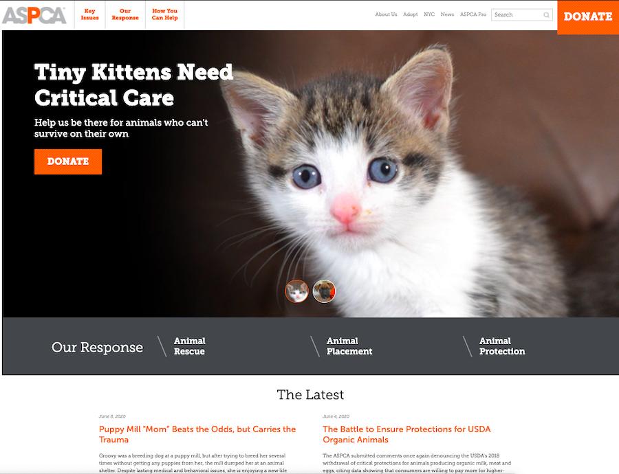 nonprofit website homepage example